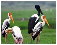 bharatpur-bird-sanctuary-tours