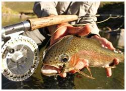 Mountain Trout Fishing Tour