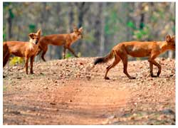 Pench with Nagzira Tour