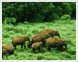 Periyar National Park,