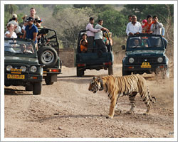 ranthambore-national-park-tour