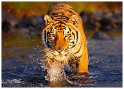 Golden Triangle Tours with Ranthambore Tiger Safari