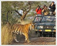 Ranthambore Jeep safaris