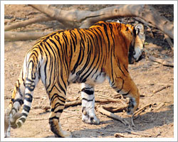 sariska-wildlife-sanctuary
