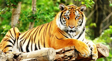 India Adventure  Wildlife Tours